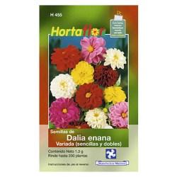 SEMILLA DALIA ENANA No. H455